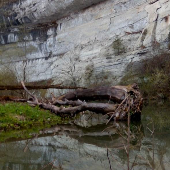 Karl Inglin - Tronc dans l'eau