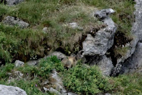 De l'autre le domaine des marmottes
