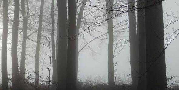 La forêt grise