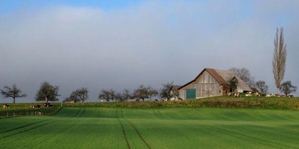 Idylle rurale à Ueberstorf